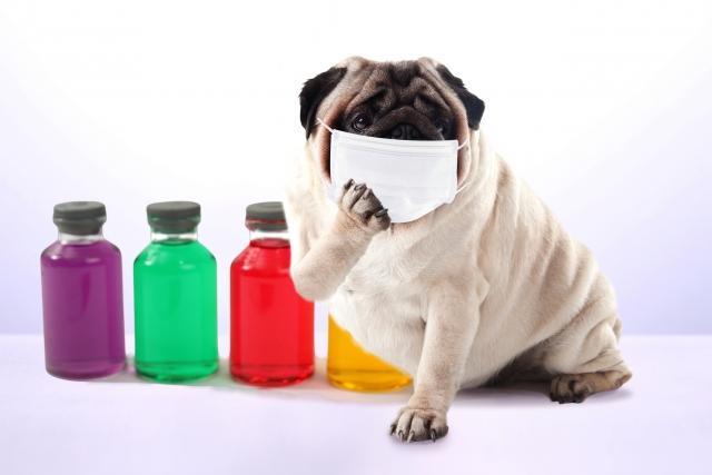 韓国旅行に持って行った方がいい日本のお薬5選!現役ガイドもお世話になっている常備薬をご紹介します。